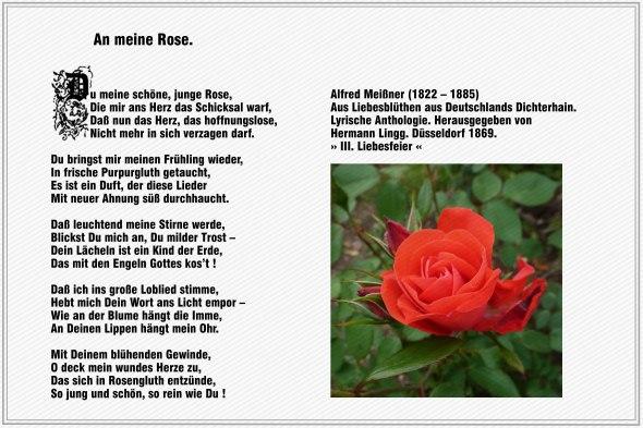 An meine Rose – Alfred  Meissner