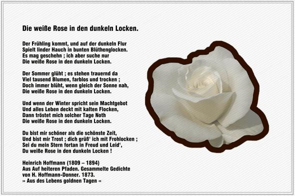 Die weiße Rose in den dunkeln Locken – Heinrich Hoffmann