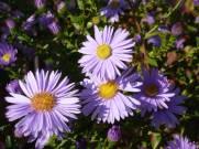 Schoene Herbstblumen 15